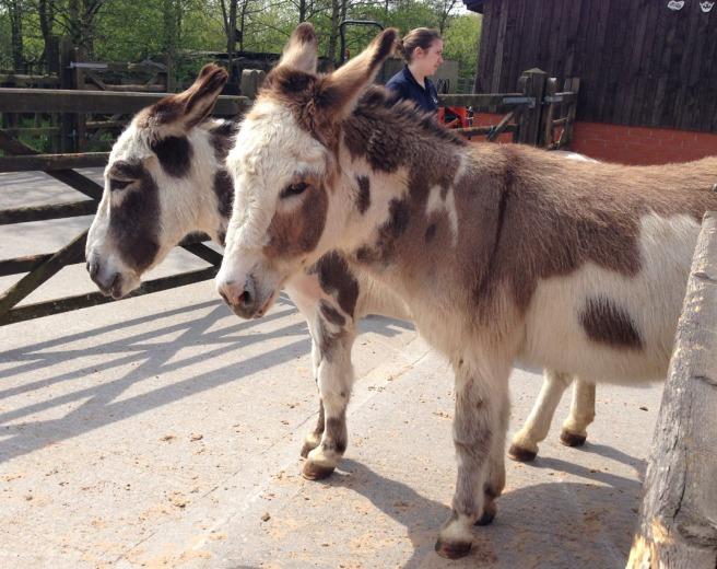 manchester donkey sanctuary