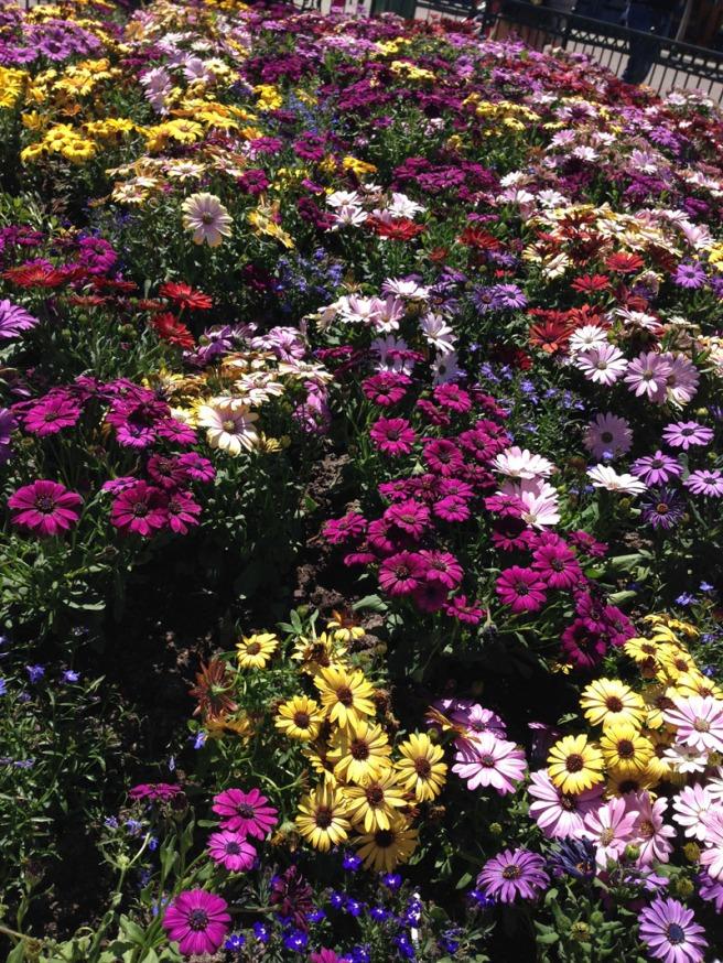 disney blooms
