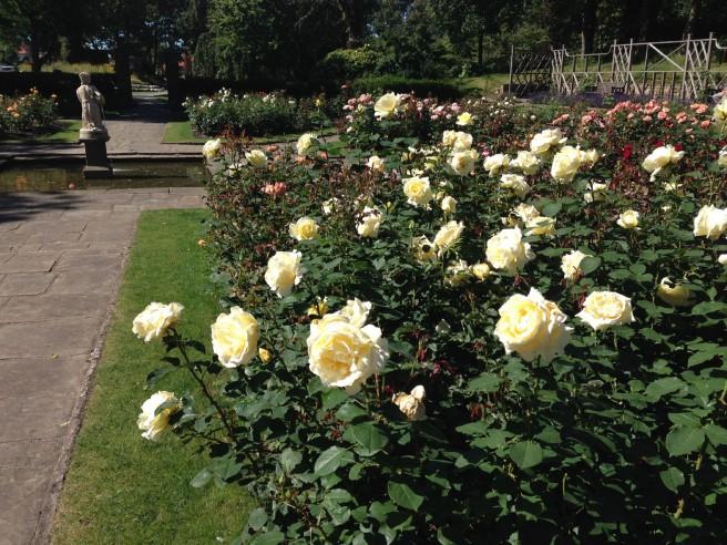 St Annes rose garden