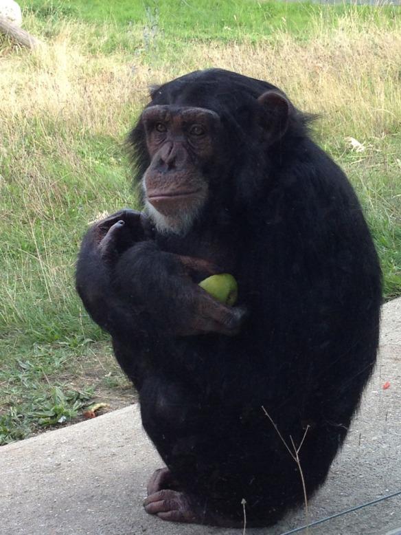 Rodders Monkey World