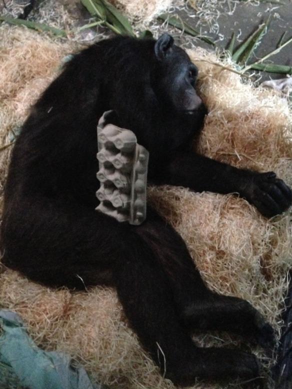 Monkey World Sleepover